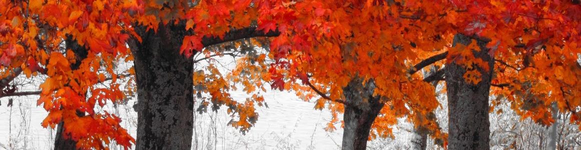 autumn_series-wallpaper-1280x720
